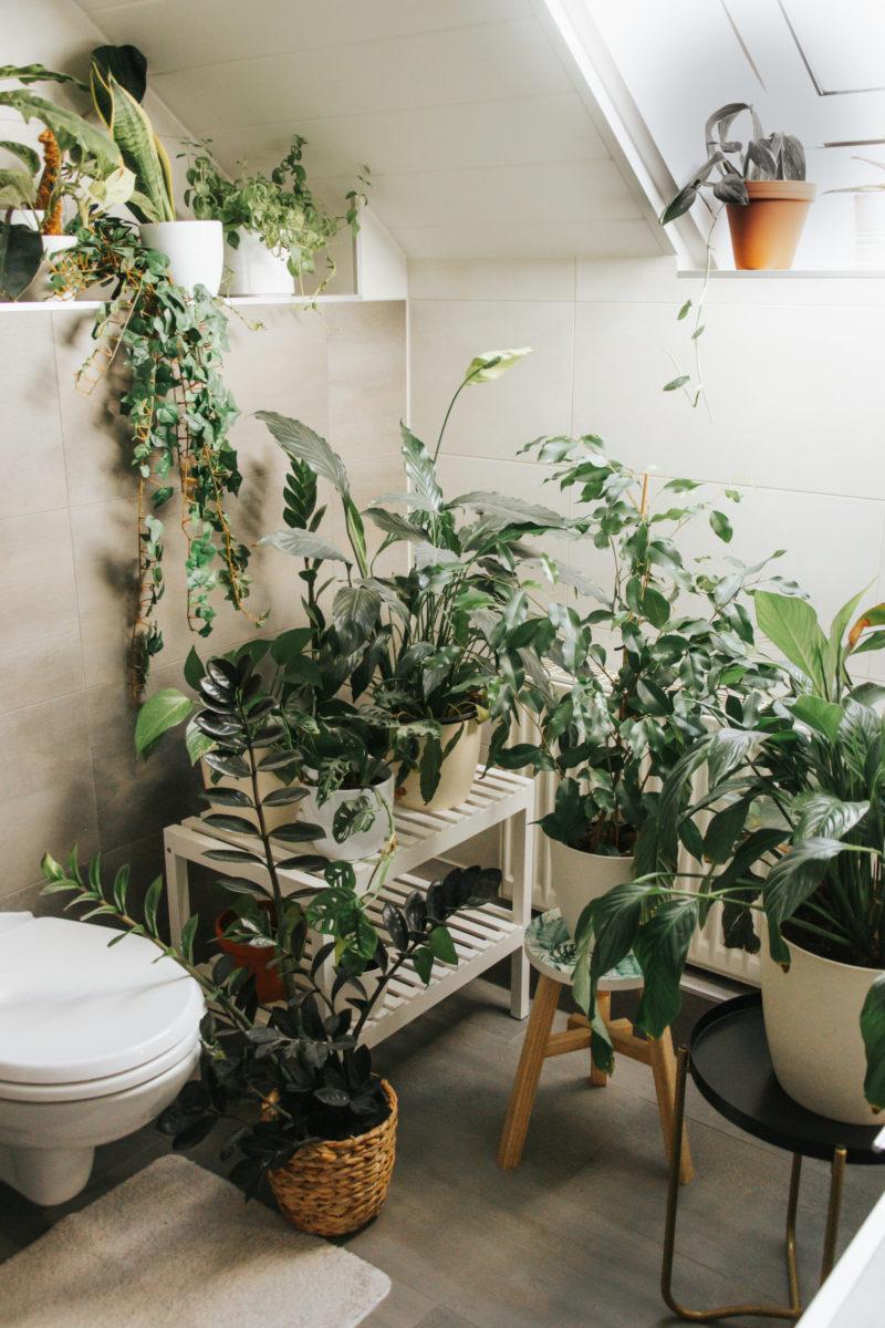 10 perfekte Pflanzen für dein Badezimmer -